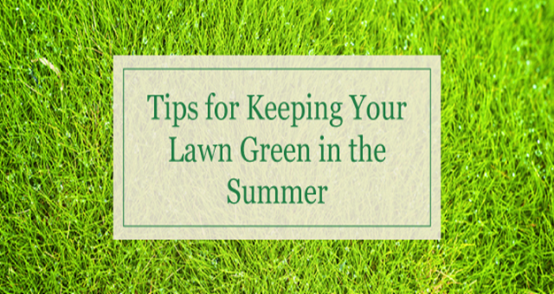 Tips for making the lawn grass green in warm weather